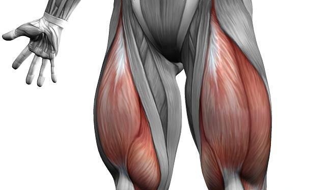 Четырёхглавый мускул или квадрицепс